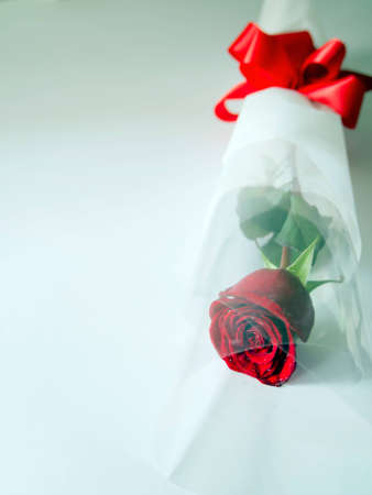 Red rose,cross-processed Stock Photo - 12408758
