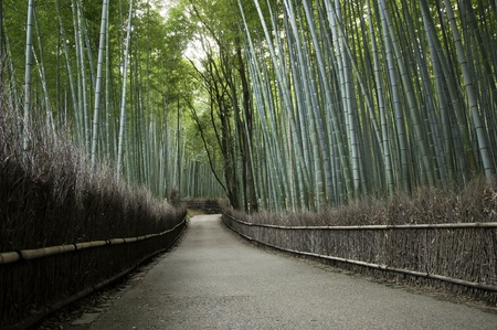 Bamboo grove in Arashiyama in Kyoto, Japan near the famous Tenryu-ji temple. Tenryuji is a Zen Buddhist temple which means temple of the heavenly dragon and is a World Cultural Heritage Site.  photo