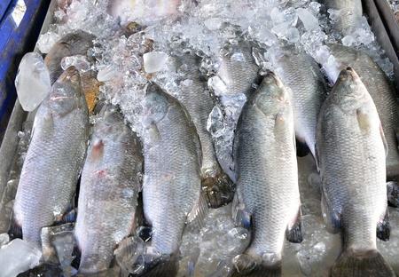 fresh fish at a fish market  in thailand Stock Photo - 17292214