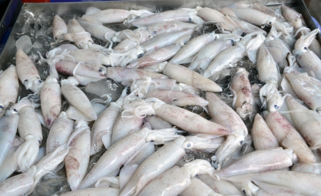 Fresh squid on ice in the market Stock Photo