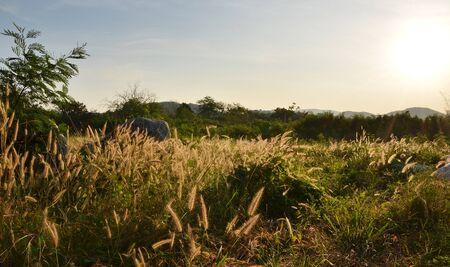 Green field and beautiful sunrise, Kao Yai, Thailand Stock Photo - 17423167