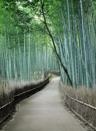 Famous bamboo grove at Arashiyama, Kyoto - Japan, near the famous Tenryu-ji temple. Tenryuji is a Zen Buddhist temple which means temple of the heavenly dragon and is a World Cultural Heritage Site.   photo