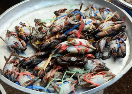 Crabs for sale, seafood markets, thailand photo