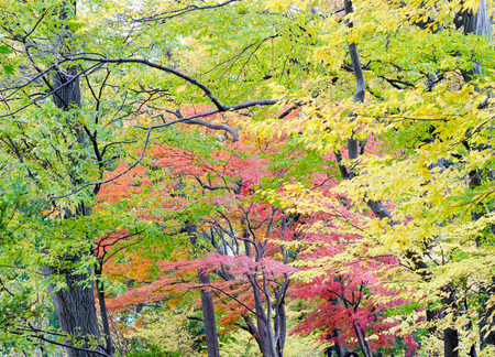 Colorful japanese maple leaf in autumn season Stock Photo - 24813097