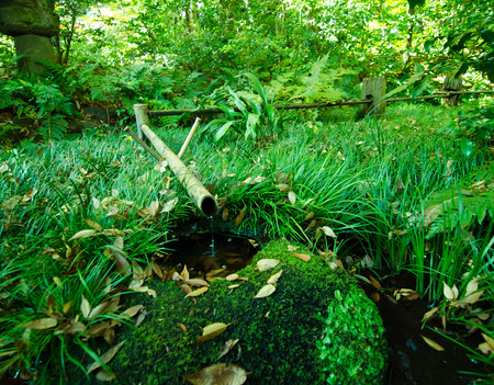 bamboo fountain: Traditional asian bamboo fountain in japanese garden
