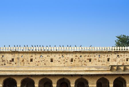 dausa: Bird at Chand Baori Stepwell in Jaipur, Rajasthan, India. Stock Photo