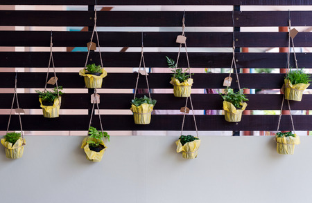 Outdoor foliage plant in pots hang on battens for small garden Standard-Bild