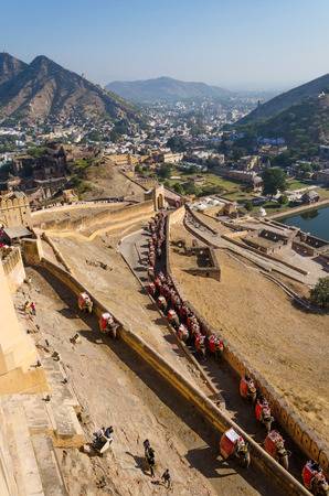 amber fort: Elephants climbing the path to Amber Fort in Jaipur, Rajasthan, India