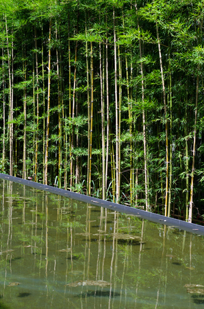 water garden: Bamboo garden with water reflection