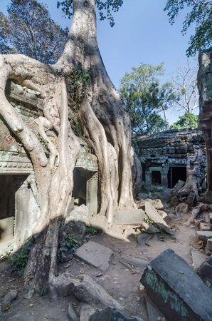 reap: Ta Prohm temple in Siem Reap, Cambodia