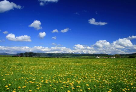 dandelion snow: Beautiful landscape Stock Photo