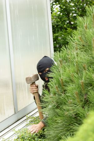 Burglar hidden behind a pine in the garden