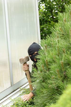 housebreaking: Burglar hidden behind a pine in the garden