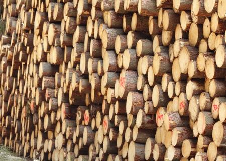 Timber logs photo