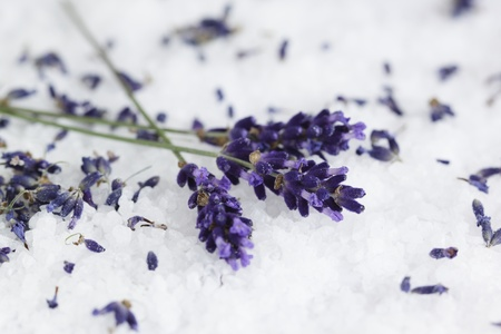 dried herb: Lavender Lavandula angustifolia aromatico on sea salt