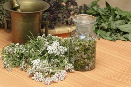 Medicinal herbs - fresh achillea millefolium, dried wild thyme and  mint photo