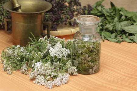 Medicinal herbs - fresh achillea millefolium, dried wild thyme and  mint