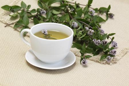 mentha: Mint tea  Mentha aquatica Stock Photo