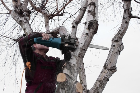 Pruning a tree Stock Photo