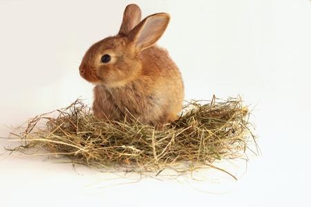 wit konijn: Bunny konijn op het hooi