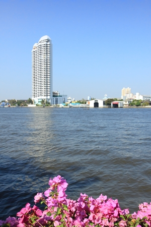 blosom: Focused on bush in blosom, skyscraper at the river Chao Phraya at back