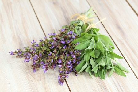 Blooming sage and its leaves Stock Photo
