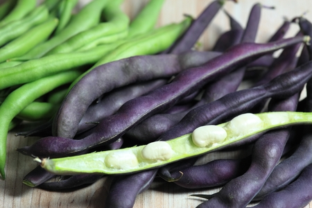runner bean: Raw  green and violet beans Stock Photo