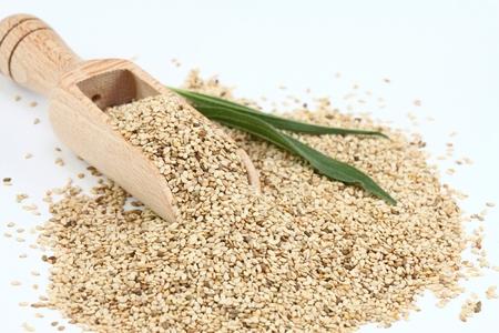 Organische ungeschält weiß Sesam. Weiß Sesam in Holzlöffel. Sesamsamen auf weißem Hintergrund.