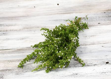 Blooming summer savory, lat. Satureja hortensis,  homeopatic remedy and traditional popular herb Stock Photo