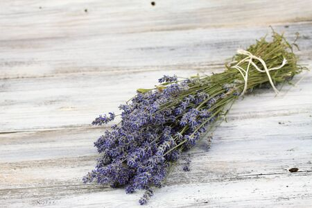 lavandula: Dried Lavandula, common name lavender, traditional culinary  herb and for extraction of  lavender oil Stock Photo