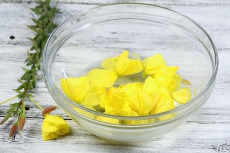 oenothera biennis: Making Bach flower remedies, Oenothera biennis, evening star, natural method of healing