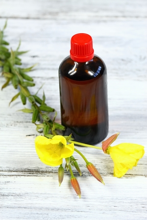 primrose oil: Evening primrose, lat. Oenothera biennis, flower and bottle of evening primrose oil