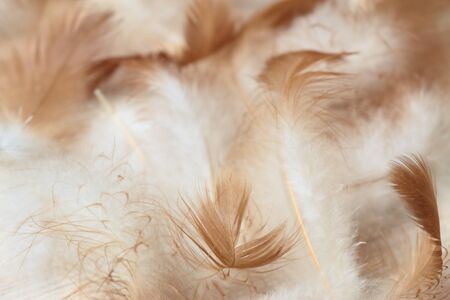 downy: Downy background made from chicken feathers. Detail of chicken feathers on the beige  wooden background.