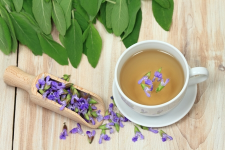 curative: Sage herbal tea, Salvia officinalis,  with sage leaves and flowers on wooden board