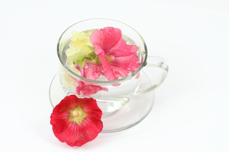 Making infusion from hollyhock flower, Alcea rosea on white. Good against cough, , laxative and inflammation herbal medicine Stock Photo