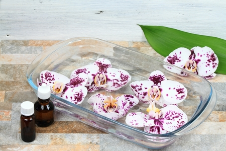 sundrops: Making Bach flower remedy from beautiful orchids.  Bach flower remedies is natural method of healing Stock Photo