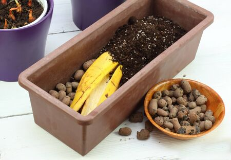 Banana peel good for plant fertilization. Eco friendly natural way how to manure plants and flowers indoor.