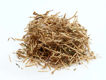 Dried Elytrigia repens roots, common weed called couch grass used in herbal medicine. Very good for detoxication and increasing immunity.