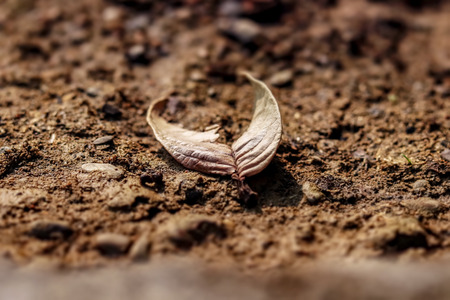 Dried half leaf on the ground