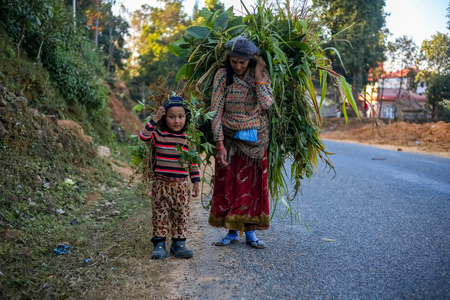 Gorkha, Nepal - December 15 2018: Mother and daughter carrying fresh grass home in the remote village of Nepal