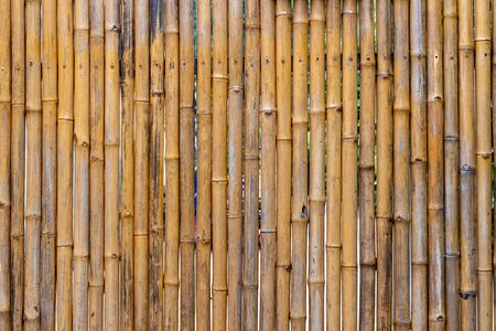 Bamboo stick background or patterns. Dried up bamboo plants used as a fence
