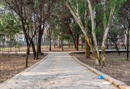 An empty floor in a city park surrounded by trees in the morning. Good for morning walk Фото со стока