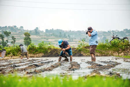 Kathmandu, Nepal - June 30 2019: Female farmers working in the field ploughing paddy on the occasion of National Paddy Day in Nepal.