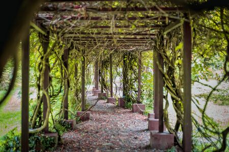 Green Pergola in the garden. Overgrown plants covered with roots inside pergola. selective focus