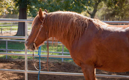 A close up of a brown horse in a outdoor stable. Stock Photo - 5749701