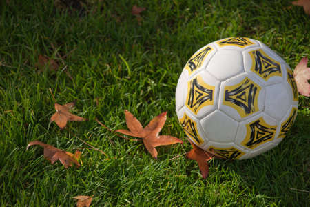 A close up of a soccer ball on green grass with fall leaves.