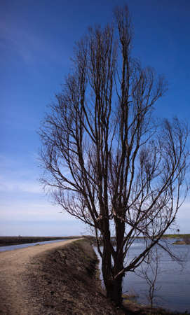 A shot of a tree in the wet lands next to a dirt trail. Stock Photo - 6519431