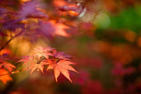 A 얕은 포커스가있는 빨간 잎 닫습니다. 스톡 콘텐츠