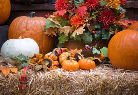 A Nahaufnahme von einer Herbst-Anzeige. Standard-Bild - 8201953