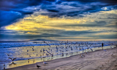 A wide shot from Huntington Beach looking toward Long Beach at hundreds of seagulls in flight around a lone woman.